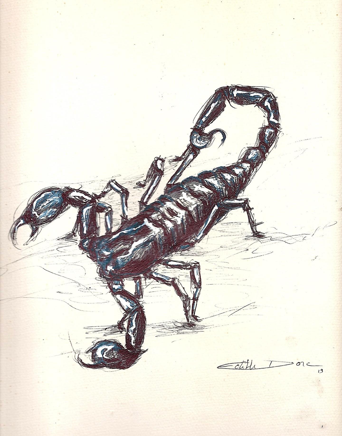 Edith Donc - Dessine moi un scorpion