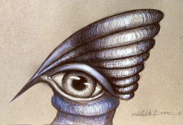 Avis seashell